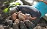 Перчатки садовые для работы с почвой, размер 7 (205) Gardena 00205-20.000.00 - фото