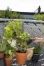 """Комлект садовых инструментов  """"Домашнее садоводство"""" (секатор, лопатка, перчатки садовые, многофункциональный кувшин с заостренным краем) (Дисплей) Gardena 08966-30.000.00 - фото"""