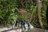 Рыхлитель ручной 7 см Comfort (ручной инструмент) Gardena 08957-20.000.00 - фото