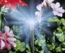 Надставка (5 шт. в блистере) Gardena 01377-20.000.00 - фото
