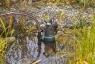 Насос дренажный для грязной воды 9300 (09006-29.000.00) - фото