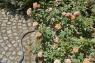 """Шланг текстильный Liano 13 мм (1/2""""), 15 м с комплектом для полива (коннектор стандартный и с автостопом, наконечник-распылитель для полива Classic арт. 18310, штуцеры резьбовые арт. 18310 и 18200) 18430-20.000.00 - фото"""