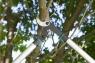 Сучкорез EnergyCut 750A 12008-20.000.00 - фото