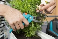 Ножницы для обрезки цветов 08971-20 - фото