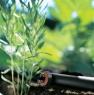 GARDENA Капельница концевая, уравнивающая давление (2л/час) (10 шт. в блистере) (8310) - фото