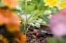 Капельница внутренняя регулируемая, уравнивающая давление (5 шт. в блистере) Gardena 08317-29.000.00 - фото