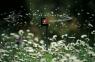 Микродождеватель круговой (2 шт. в блистере) Gardena 01369-29.000.00 - фото