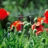 Микродождеватель шестипозиционный (5 шт. в блистере) Gardena 01396-29.000.00 - фото